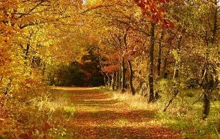 autumn-279408_640