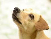 dog-972042_640